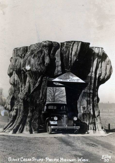 Another early Ellis log of the Arlington Stump.