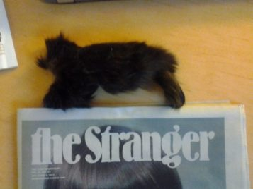 Feline Drealock, or Cat Fur Merkin?