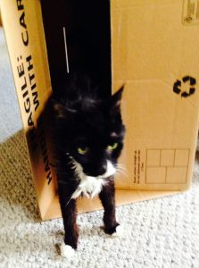 Zappa Out of the Box