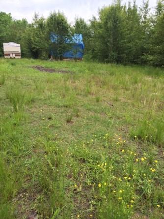 Tiny Cabin Overgrown Yard May 2016