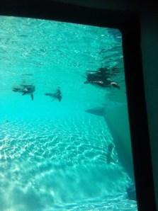 Penguin Underwater viewing