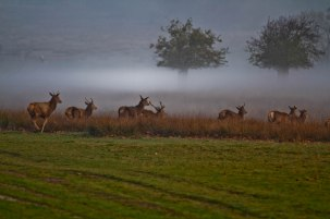 deer group on the move