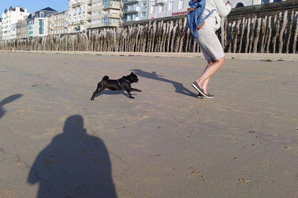 Frauchen jagen macht am Strand am meisten Spaß