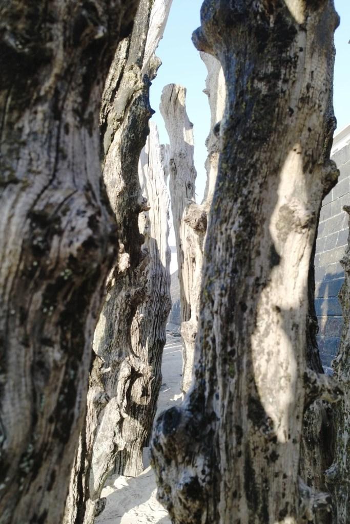 Das alte Holz dient im Winter zum brechen der Wellen