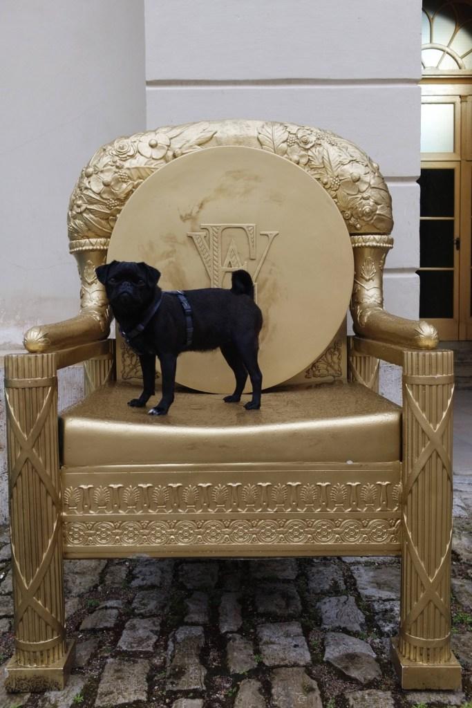 Standesgemäß thront die Mopsdame von Welt auf einem goldenen Sitzmöbel