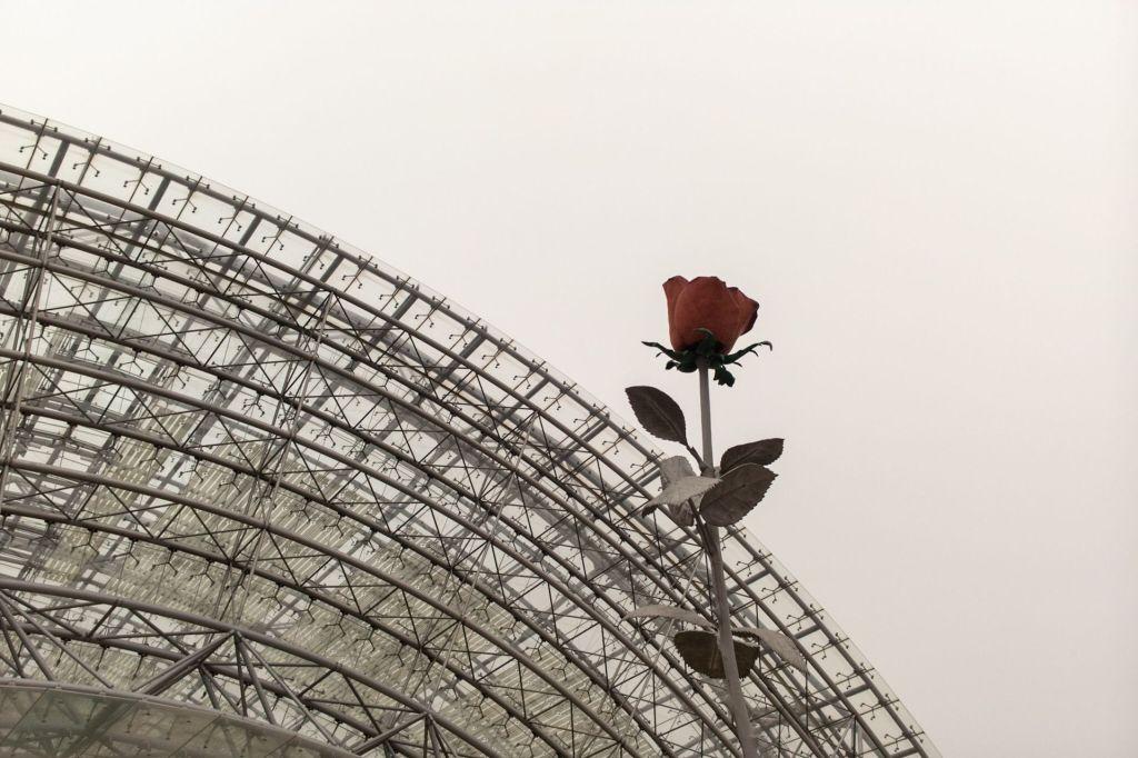 Eine schöne Rose wirkt ohne Bachelor immer noch am Besten