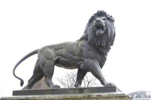 What is wrong with this seemingly magnificent lion?