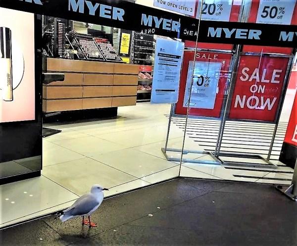 Early bird sale in Sydney