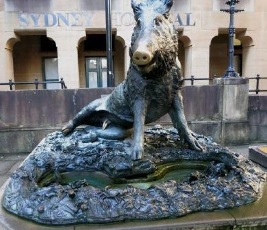 The boar with the shiny nose! You can find him in Macquarie Street Sydney.