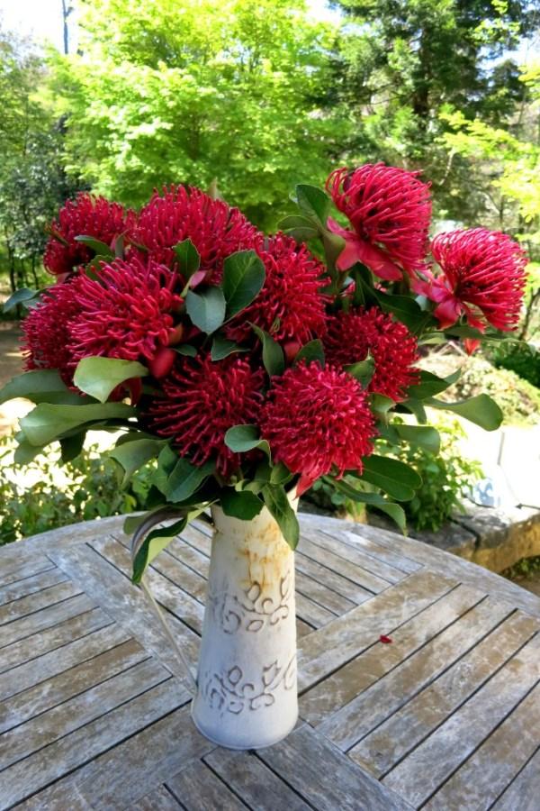 Waratah blooms