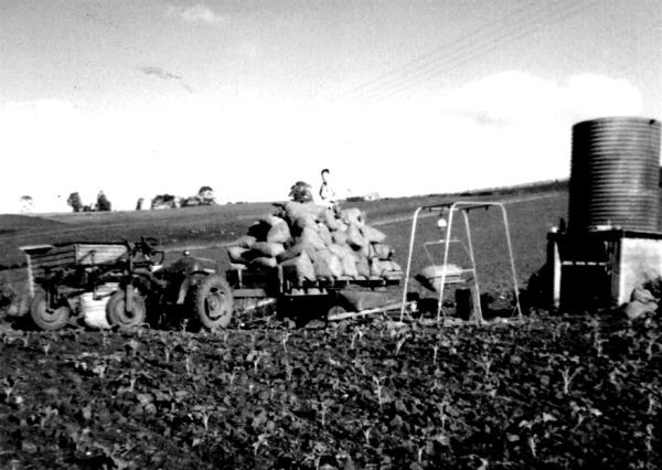 Ready for the weigh-in  of the beans. (Rowe Collection)