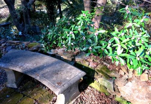 Stone daphne seat