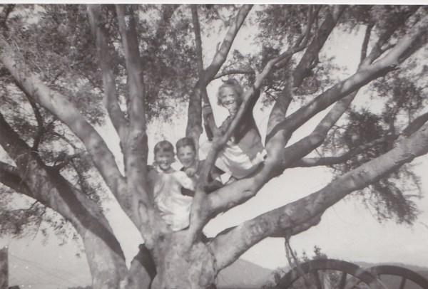 The author (left) and siblings in the old Lucerne tree. An Australian Faraway Tree.