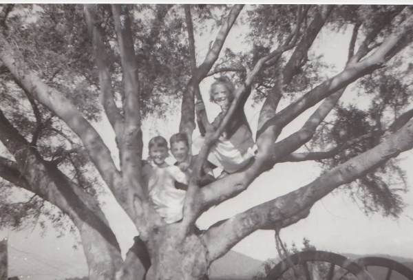 The author (left) and siblings in the old Lucerne tree.