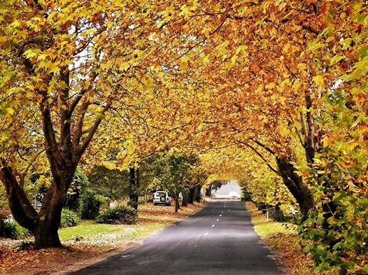 Autumn Glory in Wentworth Falls