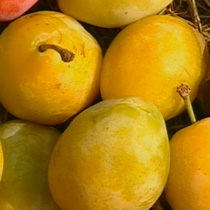 Egg plums