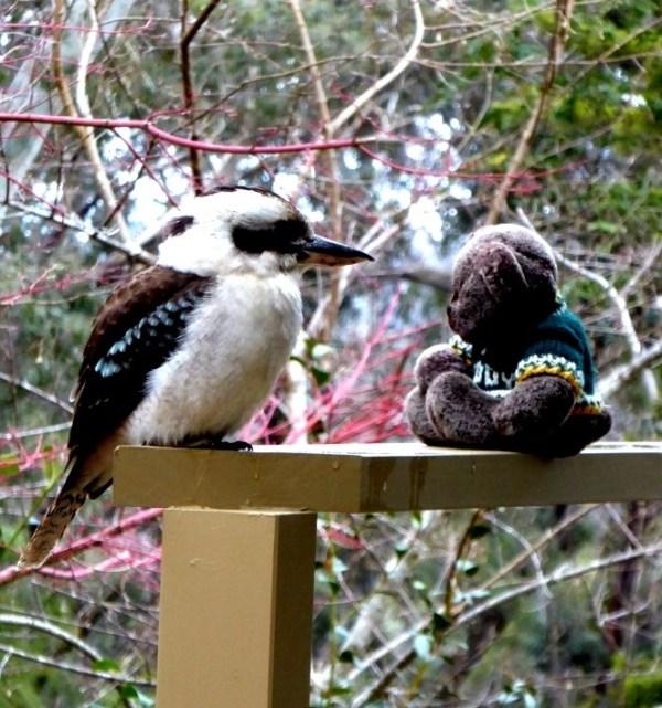 Editor Des and kookaburra