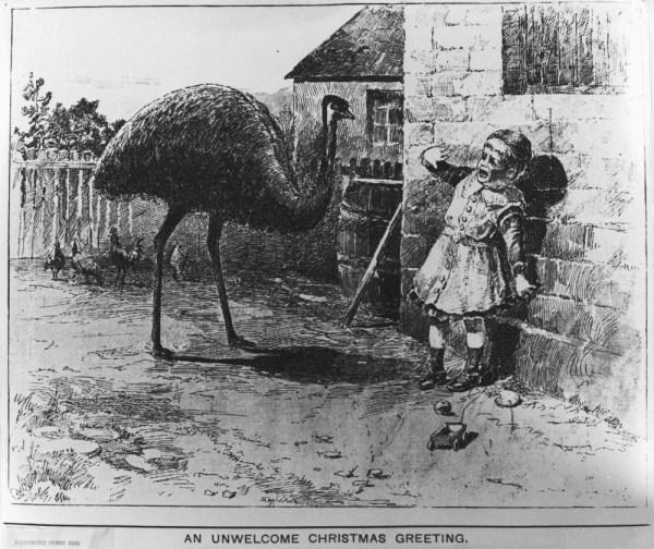 Emu Christmas Card