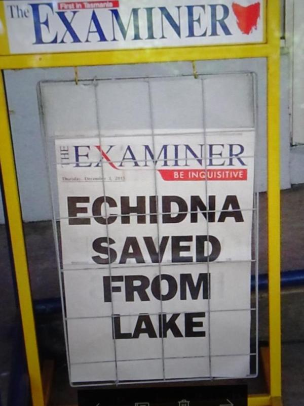 Echidna saved!