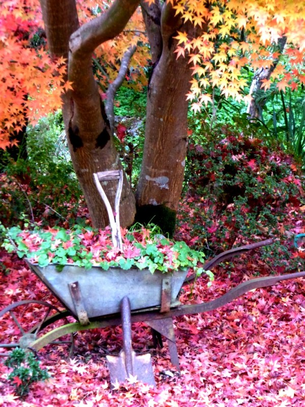 Old barrow and autumn leaves