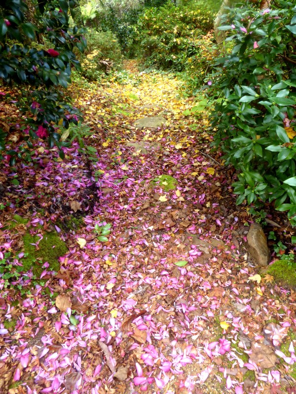 camellia petals and maple leaves make a perfect path