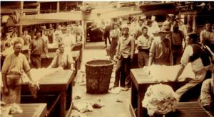 Wool sorting at Burrawang, Forbes