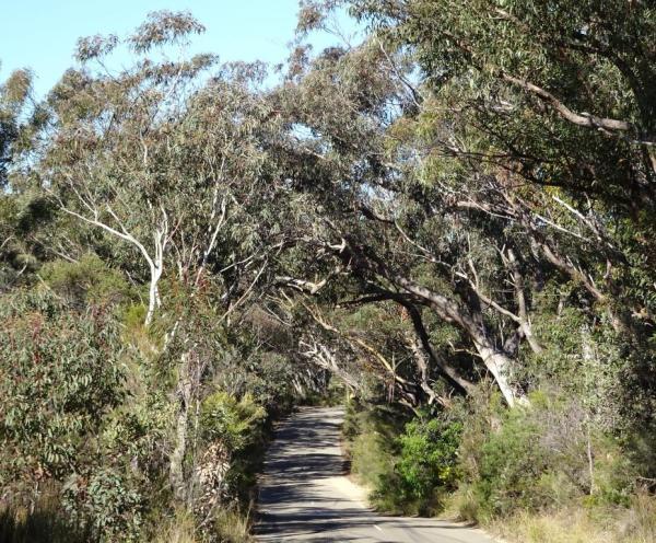 Tablelands Road, Wentworth Falls