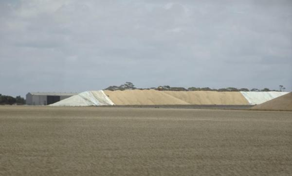Stockpiled wheat