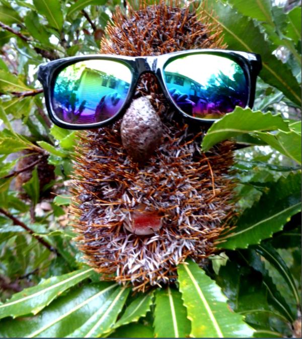 Banksia man.