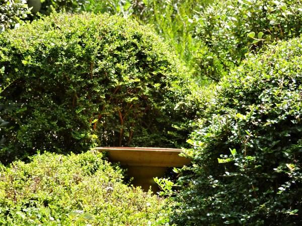 Lonicera surrounding a birdbath