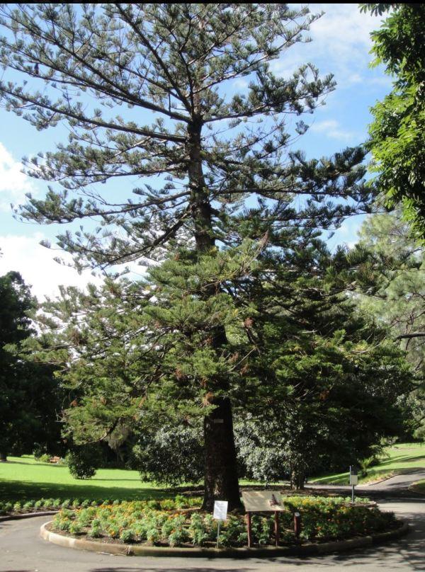 Wishing Tree in the Sydney Botanic Gardens