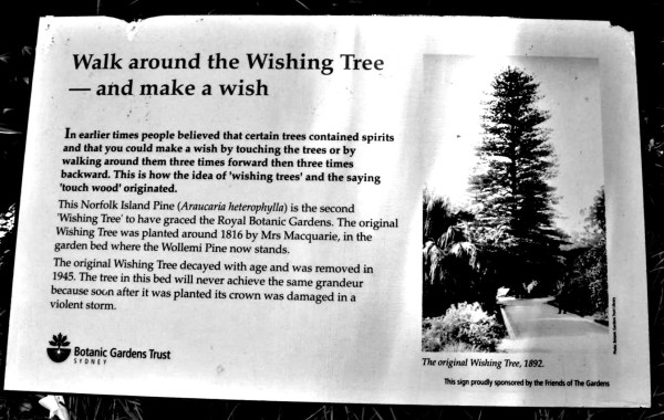 Sign by the Wishing Tree in Sydney's Botaic Gardens