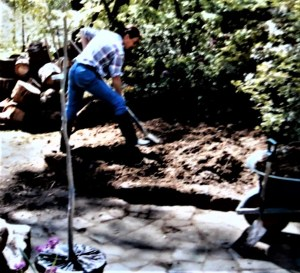 Planting a variegated tulip tree.