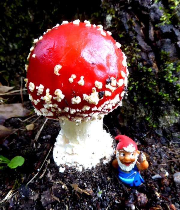 Toadstool at Blackheth NSW
