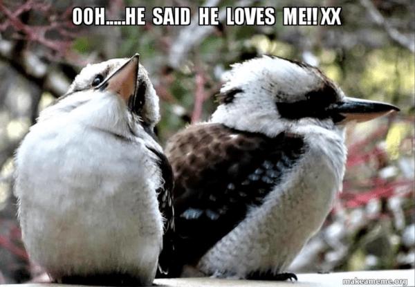 Kookburra pair.