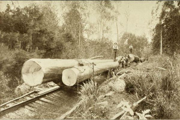 Logging tramway, Tasmania