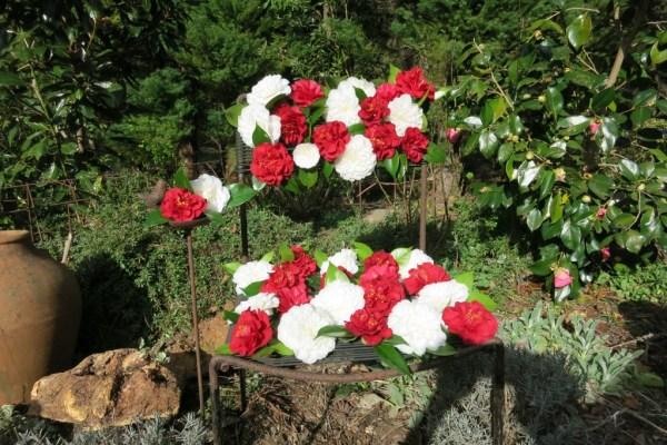 Camellia Seat