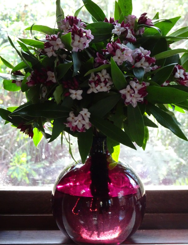The perfect vase for daphne
