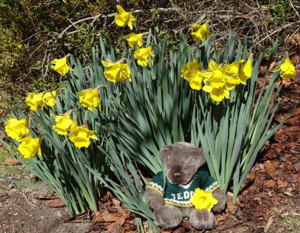 Editor Des and daffodils.
