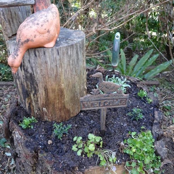 Stump garden rt.