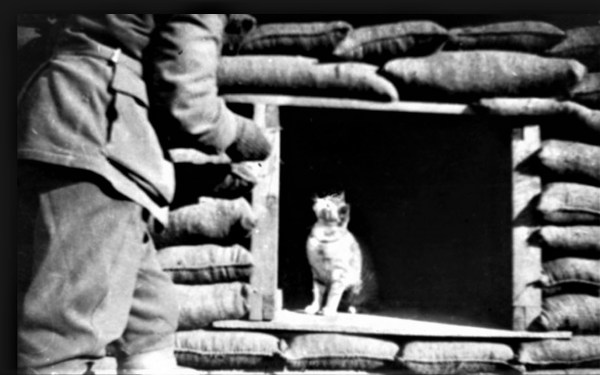 Cat in the trenches of Gallipoli