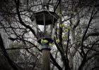 Old llamp in Memorial Park, Blackheath.