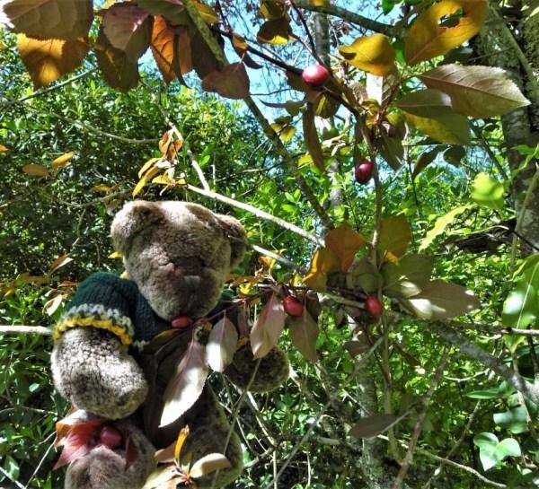 Editor Des steals wild cherries