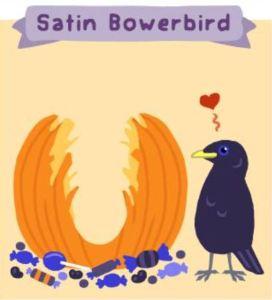 Satin bowerbird.
