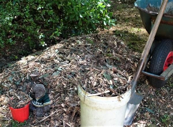 Eucalypt mulch