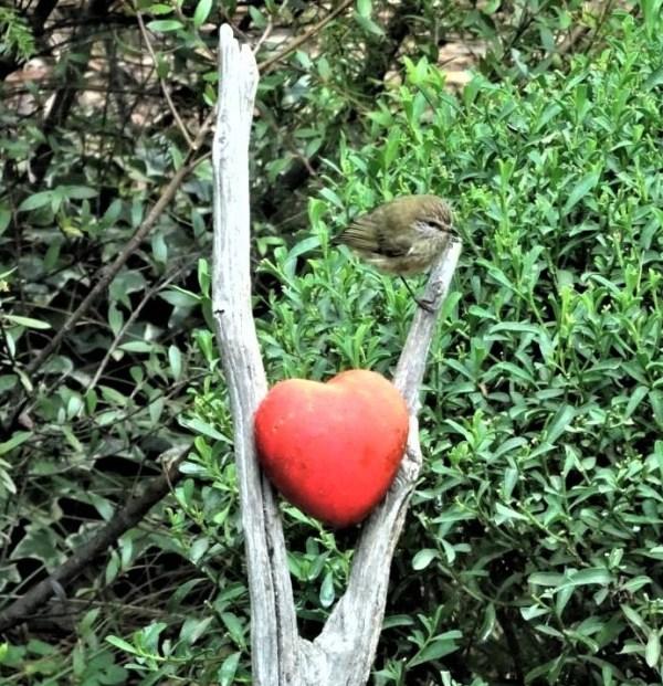 Thormbill on the Valentine post.