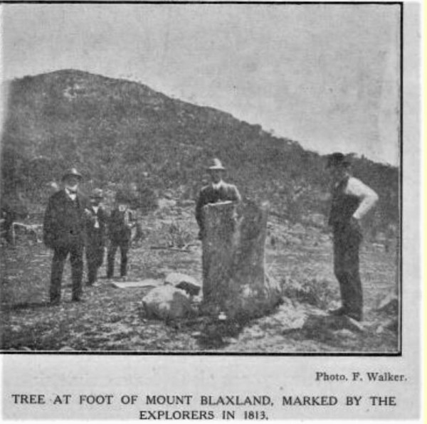 Marked tree at Mt. Blaxland