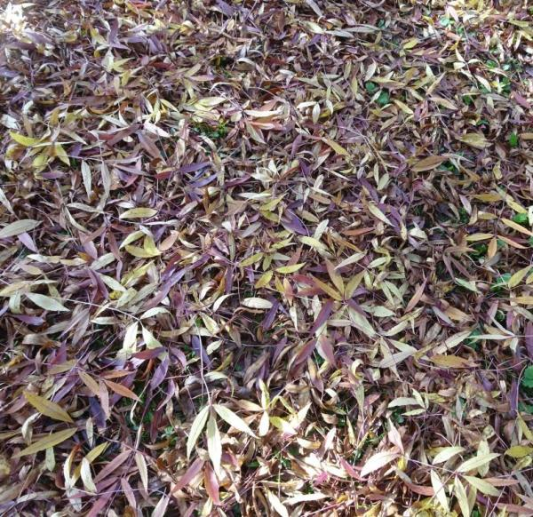 Autumn leaf carpet