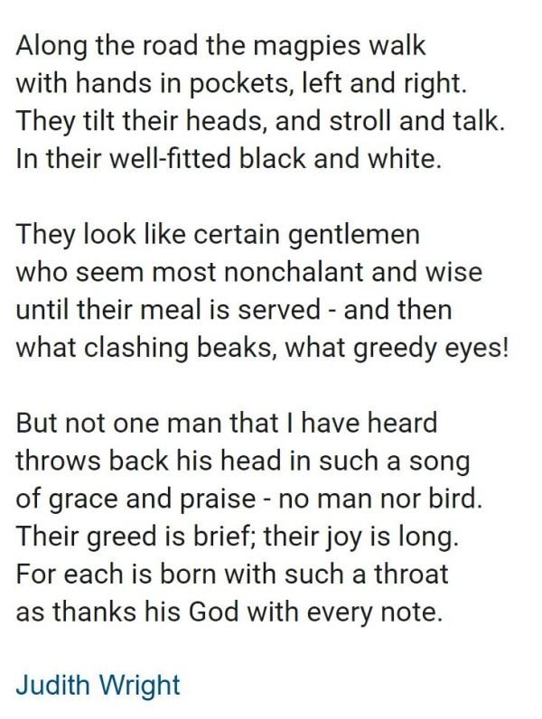 Magpie Poem by Judith Wright