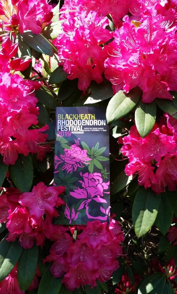 Blackheath Rhododendron  Festival